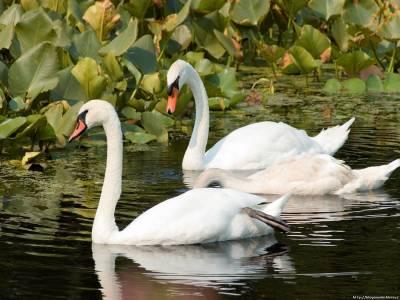 картинки перелетные птицы красивые
